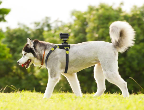 dog AKA DM1 sony 1 Sony announces six new mounting options for Action Cam video camera made for adventure